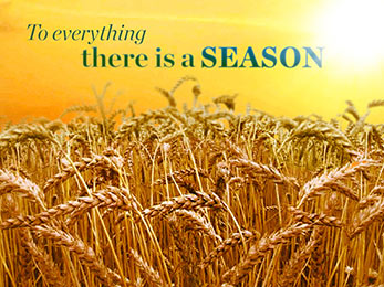 Church Art Motion Video wheat field, sun and orange sky with caption To Everything There Is A Season