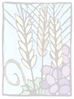 Sheaves of wheat and bunches of grapes for communion as background illustration