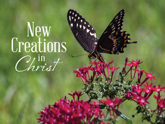 Christian Easter Graphic Photo of butterfly with New Creation caption