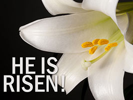 Easter Religious photo of white lily with He Is Risen caption