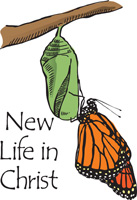 Butterfly Emerged from Cocoon with New Life in Christ Caption